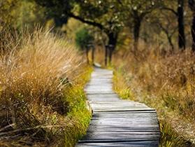 weg aus Holz durch Gras in klein, psychologische Beratung und Behandlung