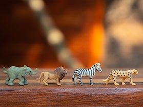 kleine Tiere, Foto für Workshops